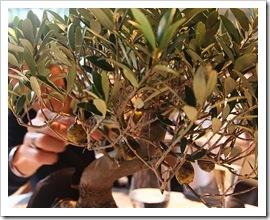 Olives caramelitzades